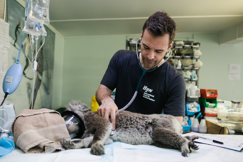 How Can You Apply Smarter To Caribbean Veterinary School?